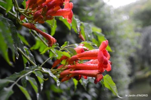 velos,pluie,belles vivaces,taille rosiers 117.JPG