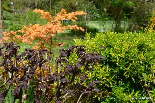 jardin printemps 098.JPG
