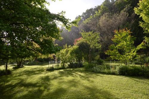 jardin,premières roses,colline,avant l'orage 117.JPG