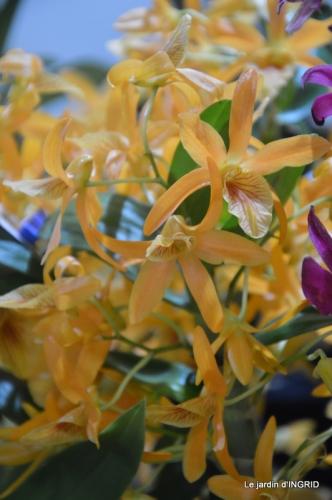 canal,jardin,Mombazillac,bonzais,orchidées 183.JPG
