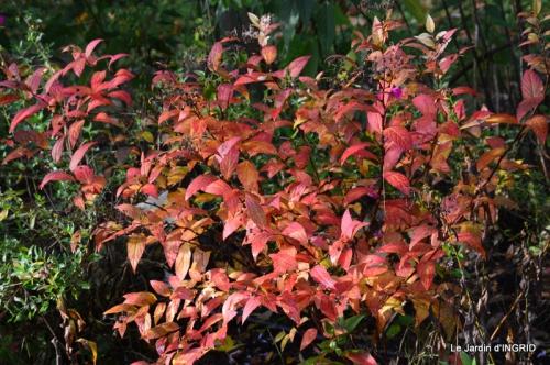 les arbres en automne,cabane 126.JPG