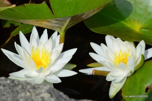 les jardins d'eau de Carsac 075.JPG