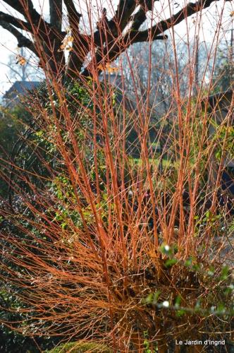 train,nid frelons,couleur jardin 019.JPG