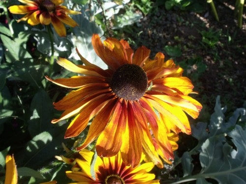 papillon.nuit,7 pigeonniers,Queyssac,jardin 076.JPG