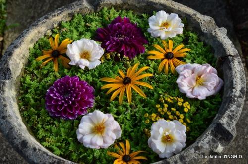 hibiscus,St Marcel,chez Brigitte,chats,jardin,Banes,papillons 120.JPG
