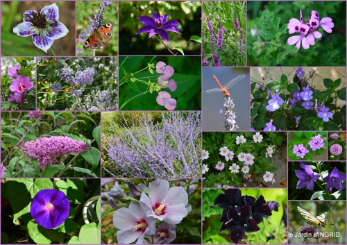 2016-07-04 hémérocalles,cygnes,dahlias,feu d'artifice,jardin,jardinières - Copie1.jpg
