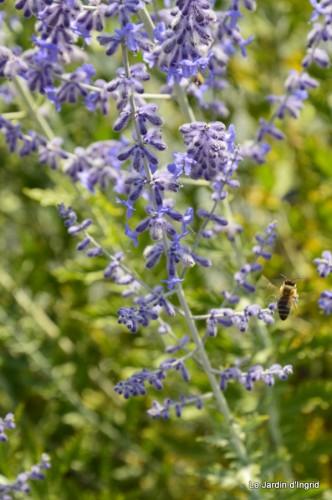 fleurs bleues,hortensia bleu,moi bébé 075.JPG