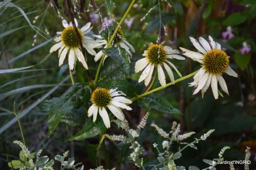 Fleurettes,Dordogne,jardin 131.JPG