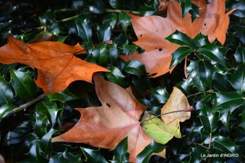 Romefort,bord de Creuse,vent,feuilles,jardin,canal 192.JPG