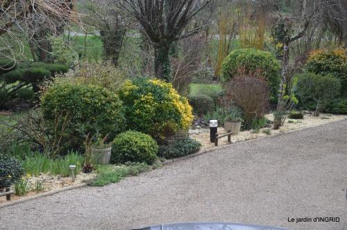 paillage,primevères,jonquilles,jardin 026.JPG