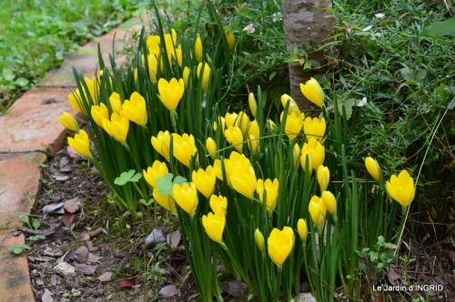 jardin ,bouquet 055.JPG