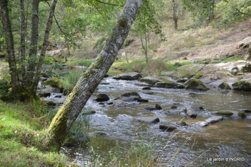 la Sedelle,étang de Riault,cyclamens 063.jpg