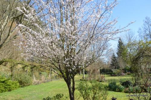 travaux,brocante,abeilles,jonquilles,prunus,mimosa 084.JPG