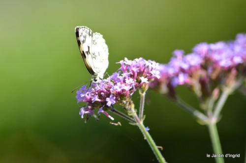 coeur des fleurs,papillons,libellules 169.JPG