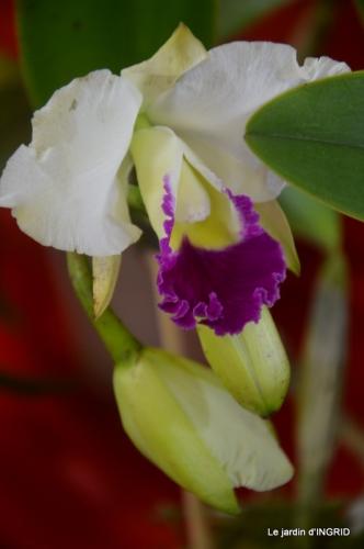 canal,jardin,Mombazillac,bonzais,orchidées 154.JPG