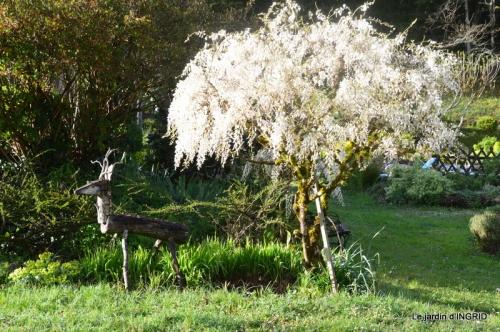 printemps,lilas,tontine 056.JPG