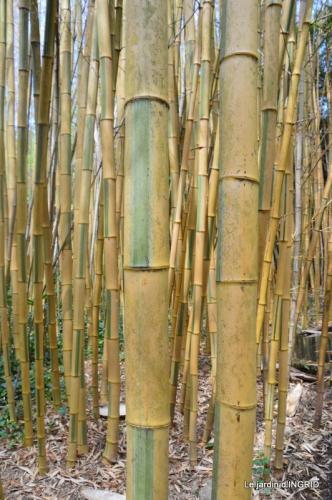 bambous Roque Gageac,jardin,bouquet 156.JPG