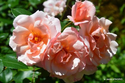 le jardin de Frescati,roses 069.JPG