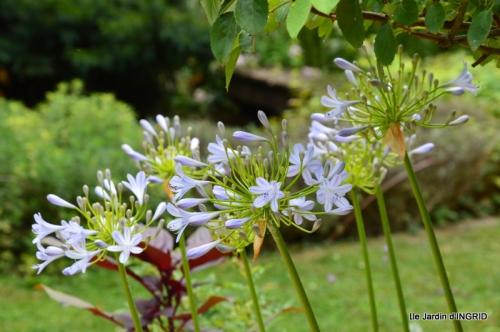 dahlias,jardin,puces st Avit Seigneur,Paniers Issigeac,Romane 078.JPG