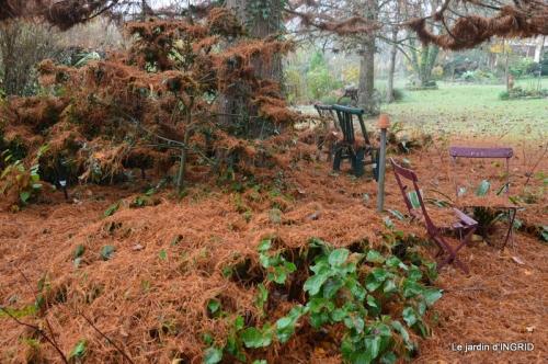 Brouillard,cypres chauve,jardinage 035.JPG