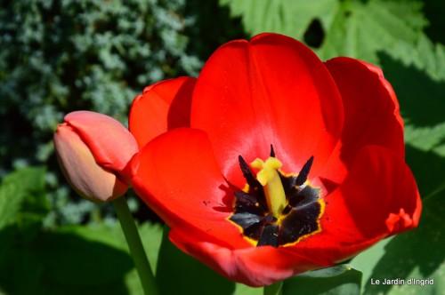 tour du jardin printemps 031.JPG