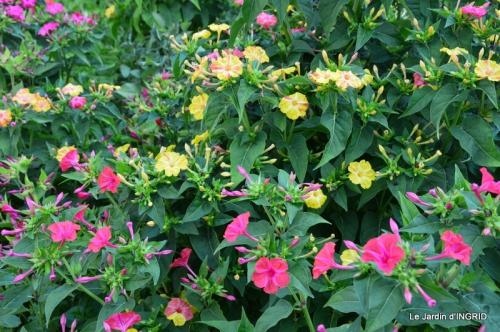 dahlias,jardin,puces st Avit Seigneur,Paniers Issigeac,Romane 047.JPG