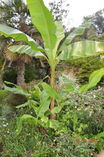 champignons,citrouilles,st Mayme de Péreyrol,fuschias,jardin aut 117.JPG