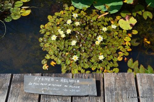 les jardins d'eau de Carsac 172.JPG