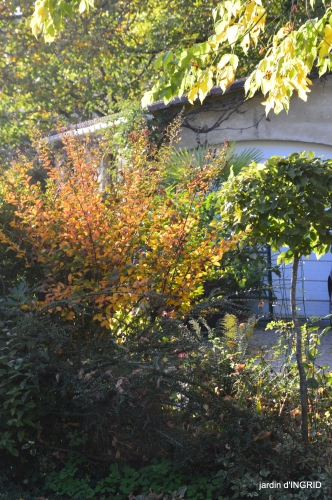 Jardin à l'automne 131.JPG