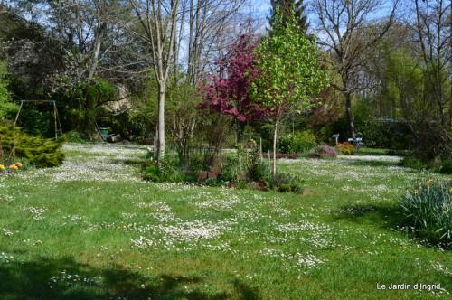 paquerettes,arums,laurier palme,jardin 030.JPG
