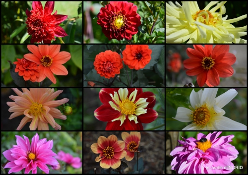 2016-07-31 libellules,papillon,jardin,Froidefond,David,Meyrals3.jpg