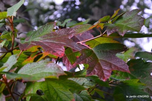 brouillard le matin d'automne 046.JPG