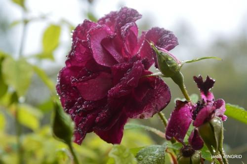 Neuvic,jardin,champignons canal 166.JPG