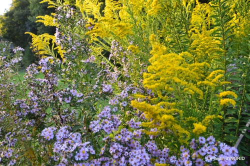 jardin Mme Perichou,grandes fleurs,bouquet,jardin 103.JPG