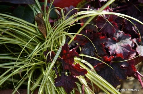 tulipes,crocus ,jardin 022.JPG