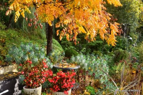 feuillages d'automne et tonte de la pelouse 015-001.JPG