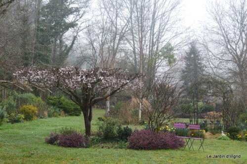 choux printanier,dentelles,jardin 042.JPG