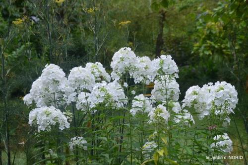 Ines,jardin,lagestromia,brocante Lalinde 067.JPG