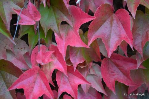 sauges,plectanthrus,Romane,canal,manthe r.,automne 069.JPG
