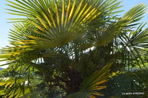 bambous Roque Gageac,jardin,bouquet 220.jpg