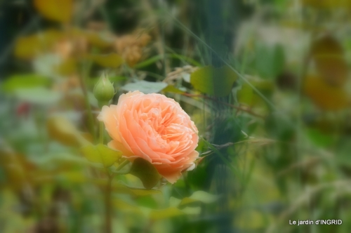 sentier des cygnes,hémérocalles,bouquet,jardin 103.JPG