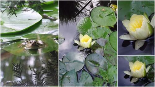 2012-09-20 canal,Vergt,bassin,jardin,terrasse piscine.jpg