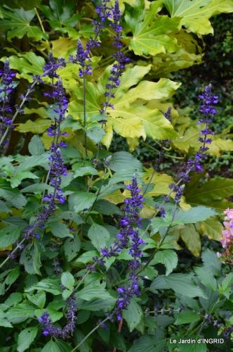 jardin ,bouquet 031.JPG