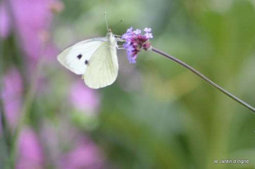 coeur des fleurs,papillons,libellules 127.JPG