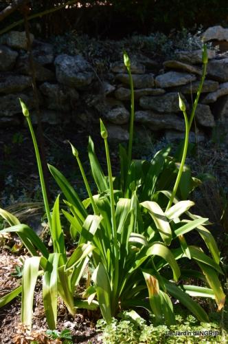 albizia,bouquet,plantes  en A 032.JPG
