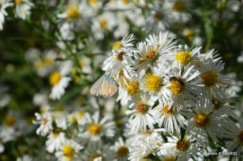 papillons,couleurs d'automne,Bernadette,pluie 054.JPG