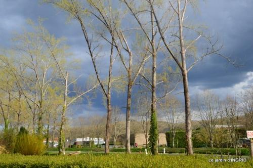 Canal,Julie,paquerettes 016.JPG