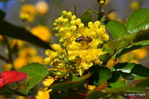 tour du jardin printemps 025.JPG