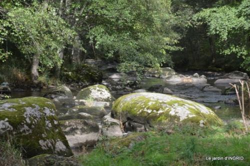 la Sedelle,étang de Riault,cyclamens 062.jpg
