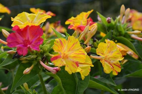 Issygeac,st Avit Seigneur,carpes kois,jardin,fleurs rouges 117.JPG